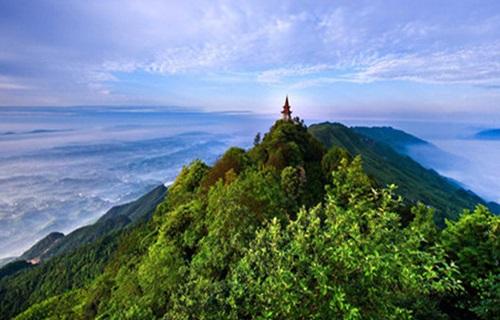 茶山竹海风景图
