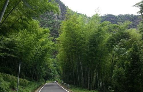 茶山竹海国家森林公园之竹海