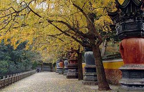 天童国家森林公园美景