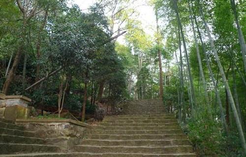 天童国家森林公园风景图