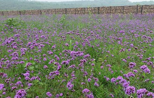 红石沟生态休闲农场花卉观赏区