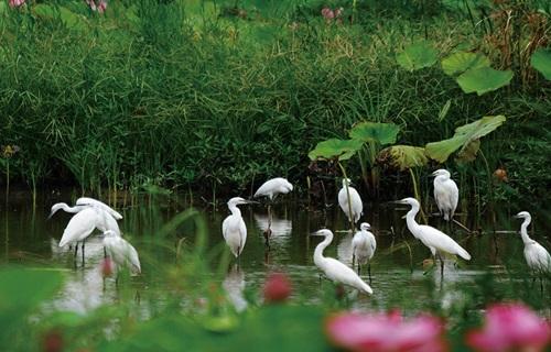 微山湖国家湿地景区