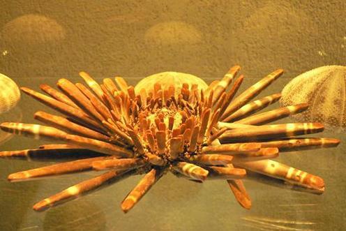 大连贝壳博物馆展品