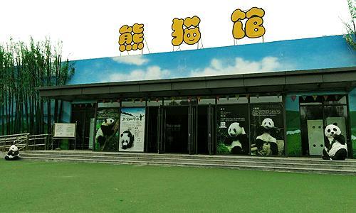 泰山花海熊猫馆