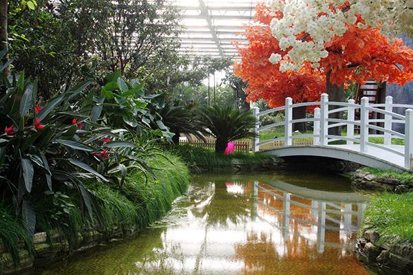 龙园休闲度假农庄热带雨林馆内部的大面积绿植
