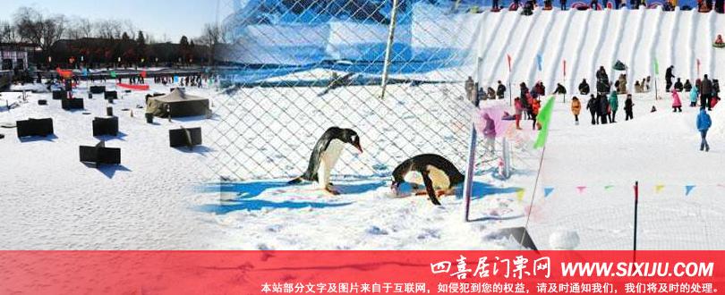 陶然亭冰雪嘉年华里的小企鹅