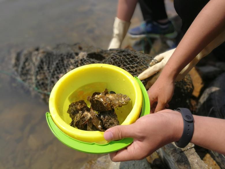 海蛎子海鲜采摘